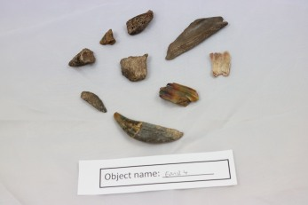EMB4: bones found at Malham Cove near the cliff face. Some are thought to be teeth from big predators